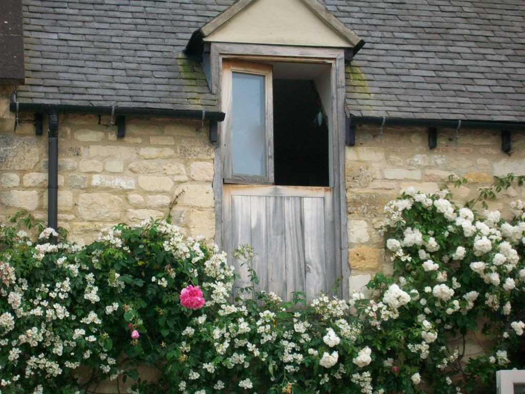 Climbing roses - North Cotswold Contruction Company, experts in building and renovation